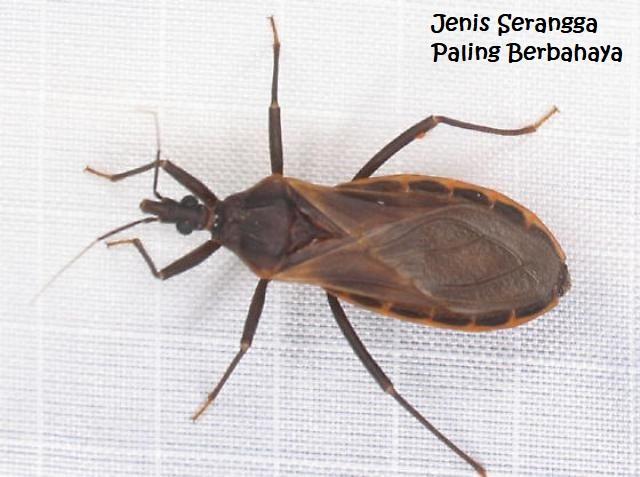Jenis Serangga Paling Berbahaya