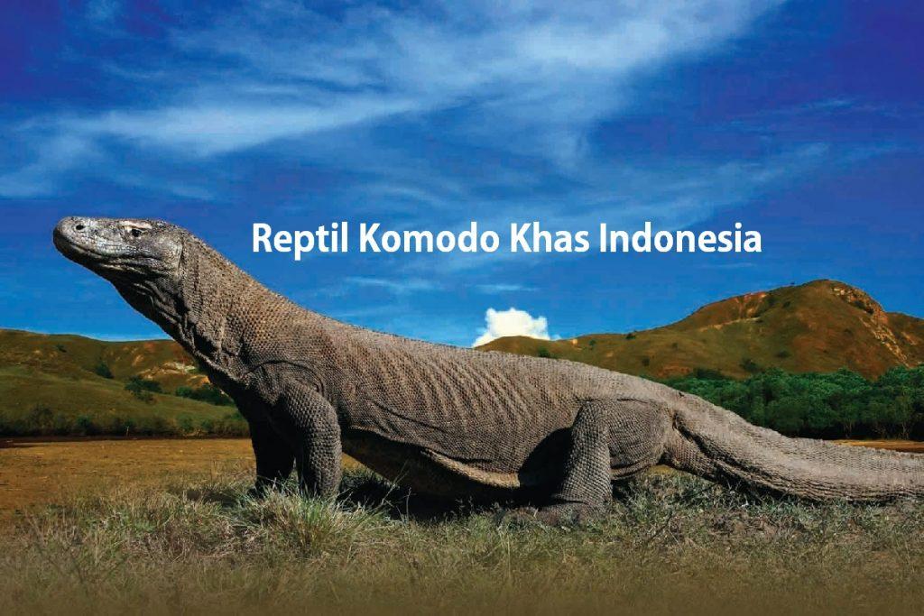 Reptil Komodo Khas Indonesia