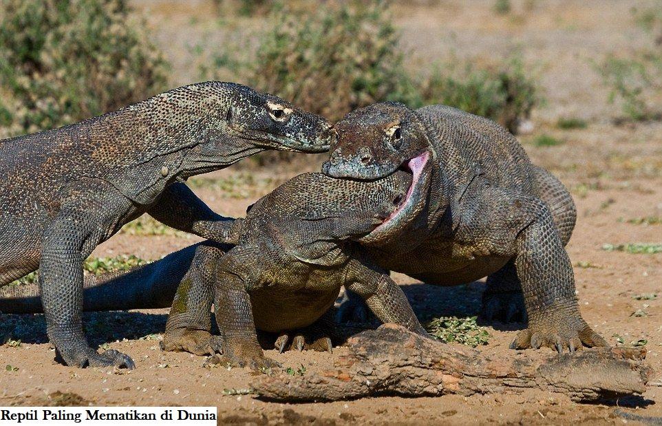 Reptil Paling Mematikan di Dunia