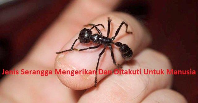 Jenis Serangga Mengerikan Dan Ditakuti Untuk Manusia